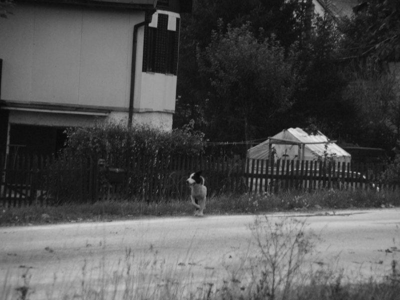...... je líto zatoulaných psů na silnici ....