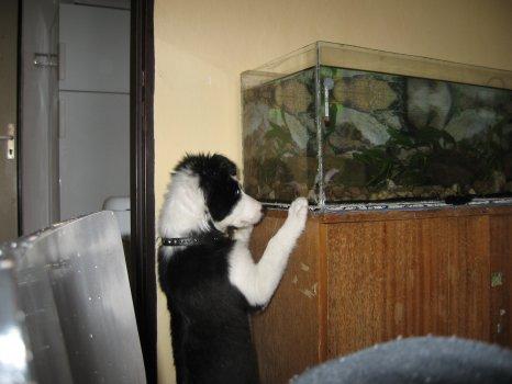 18.8.2007