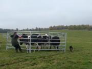 ...zaříkávač krav ...